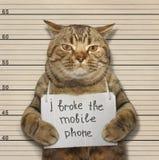 Katze brach Telefon Stockbild