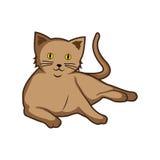 Katze bunt Stockbilder