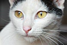Katze in Chiang Khong, Thailand Lizenzfreie Stockfotos