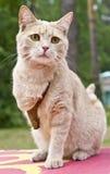 Katze das unzulässige Lizenzfreie Stockfotografie