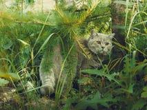 Katze in den Büschen Stockfotos