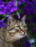 Katze in den Blumen. Lizenzfreies Stockfoto