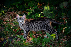 Katze in den Gartenwegen lizenzfreie stockfotos