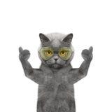 Katze in den Gläsern, die sich Daumen und Willkommen zeigen Stockfotografie
