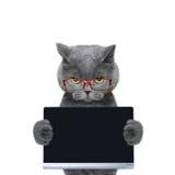Katze in den Gläsern hält eine Tablette oder einen Laptop Lizenzfreie Stockbilder