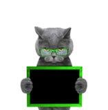 Katze in den grünen Gläsern hält Rahmen in seinen Tatzen Stockfoto
