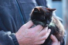 Katze in den Händen eines Mannes Lizenzfreie Stockfotografie