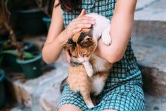 Katze in den Händen von Frauen stockfoto