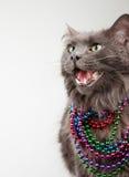 Katze in den Kornen Lizenzfreies Stockfoto