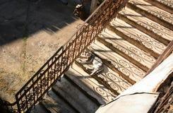 Katze in den Schritten des Treppenhauses Stockbild
