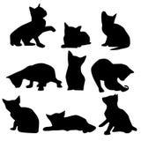 Katze in den verschiedenen Haltungen Stockbilder