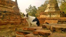 Katze in der alten Stadt Stockbild