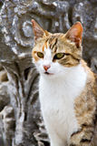 Katze in der alten Stadt Ephesus Lizenzfreie Stockfotografie