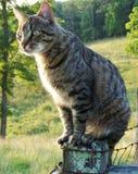 Katze der Bauernhofgetigerten katze, die auf Zaun sitzt Lizenzfreie Stockfotografie