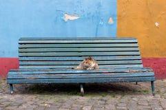 Katze an der blauen Bank Stockfoto