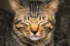 Katze in der dunklen Nacht Stockfoto
