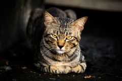 Katze in der dunklen Nacht stockbilder