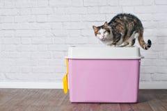 Katze der getigerten Katze, die auf einem rosa Spitzeneintrittskatzenklo sitzt stockfotos