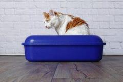 Katze der getigerten Katze, die im Katzenklo sitzt stockfotografie