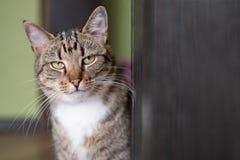 Katze der getigerten Katze, die nahe Tür sitzt lizenzfreie stockfotos