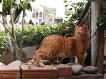 Katze der getigerten Katze, die Neugier zeigt Barranco-Bezirk von Lima Lizenzfreie Stockfotos
