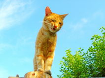 Katze der getigerten Katze! lizenzfreie stockfotos