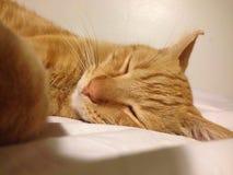 Katze der getigerten Katze des orange Gelbs Lizenzfreies Stockfoto