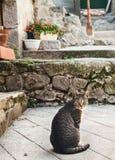 Katze der getigerten Katze, die auf einer Pflasterung in Entrevaux, Frankreich sitzt Stockbilder