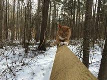 Katze der getigerten Katze, die einen Zaun kratzt Lizenzfreies Stockbild