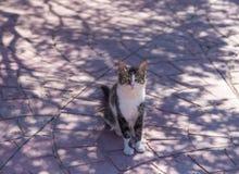 Katze der getigerten Katze, die im Schatten sitzt Stockbild