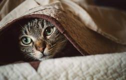 Katze der getigerten Katze, die unter einer Decke sich versteckt Lizenzfreie Stockfotografie