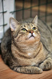 Katze der getigerten Katze I Lizenzfreie Stockbilder