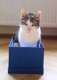 Katze der getigerten Katze im Kasten Stockbilder
