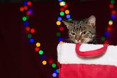 Katze der getigerten Katze innerhalb eines Weihnachtspräsentkartons Stockbilder