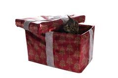 Katze der getigerten Katze innerhalb eines Weihnachtspräsentkartons Lizenzfreies Stockfoto
