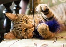 Katze der getigerten Katze kaut ein Spielzeug Lizenzfreie Stockbilder