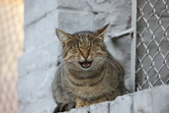 Katze der getigerten Katze in Kiew Lizenzfreie Stockbilder