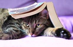 Katze der getigerten Katze mit einem Buch Lizenzfreie Stockfotos