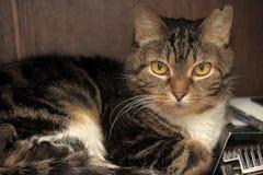 Katze der getigerten Katze mit einem weißen Kasten Stockfoto