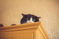 Katze der grünen Augen Nahes hohes Verstecken der Katze auf einem Schrank, der Zuschauer mit Raum nach der Werbung, künstlerische Stockfoto