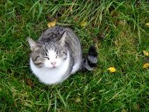 Katze - der Herbst gerochen Stockfotos