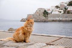 Katze in der Hydra Lizenzfreies Stockfoto