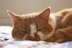Katze der Ingwergetigerten katze, die auf Bett schläft Lizenzfreie Stockbilder
