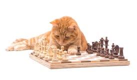 Katze der Ingwergetigerten katze, die sorgfältig seine Stücke auf einem Schachbrett beobachtet Stockfotografie