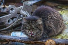 Katze Der Inhaber der Müllgrube Stockbild