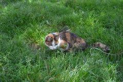 Katze an der Jagd Stockbild