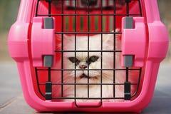 Katze in der Käfig-Fördermaschine Stockfotos