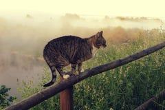 Katze in der ländlichen Landschaft Lizenzfreie Stockfotografie