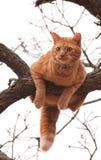 Katze in der Mühe Lizenzfreie Stockfotos