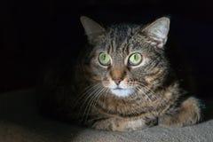 Katze der Makrelen-getigerten Katze, die direkt der Kamera in der Dunkelheit liegt und betrachtet lizenzfreie stockfotos